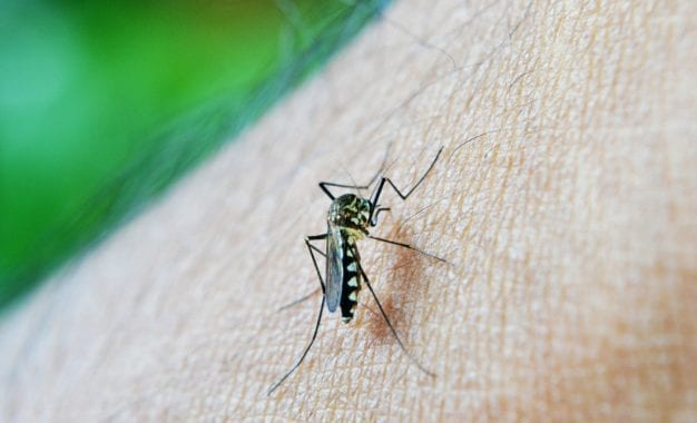 Editorial: How to mosquito-proof your home