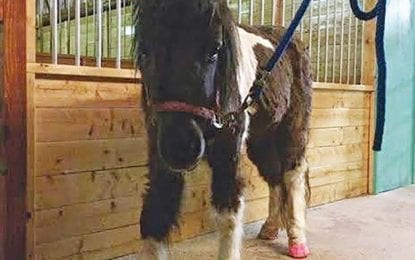 Donations sought for sick pony's care