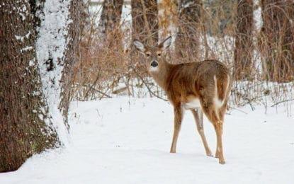 Deer and tick forum to be held in DeWitt April 29