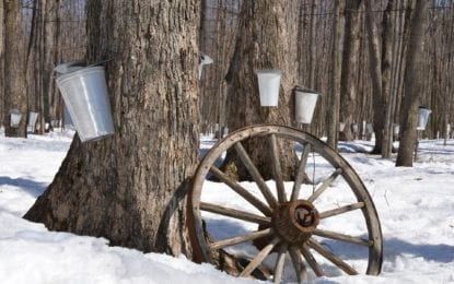 A sweet way to enjoy spring: Maple Weekend takes place March 18-19, 25-26