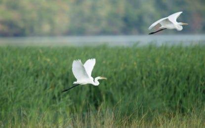 Local photographers to showcase birds returning to Onondaga Lake