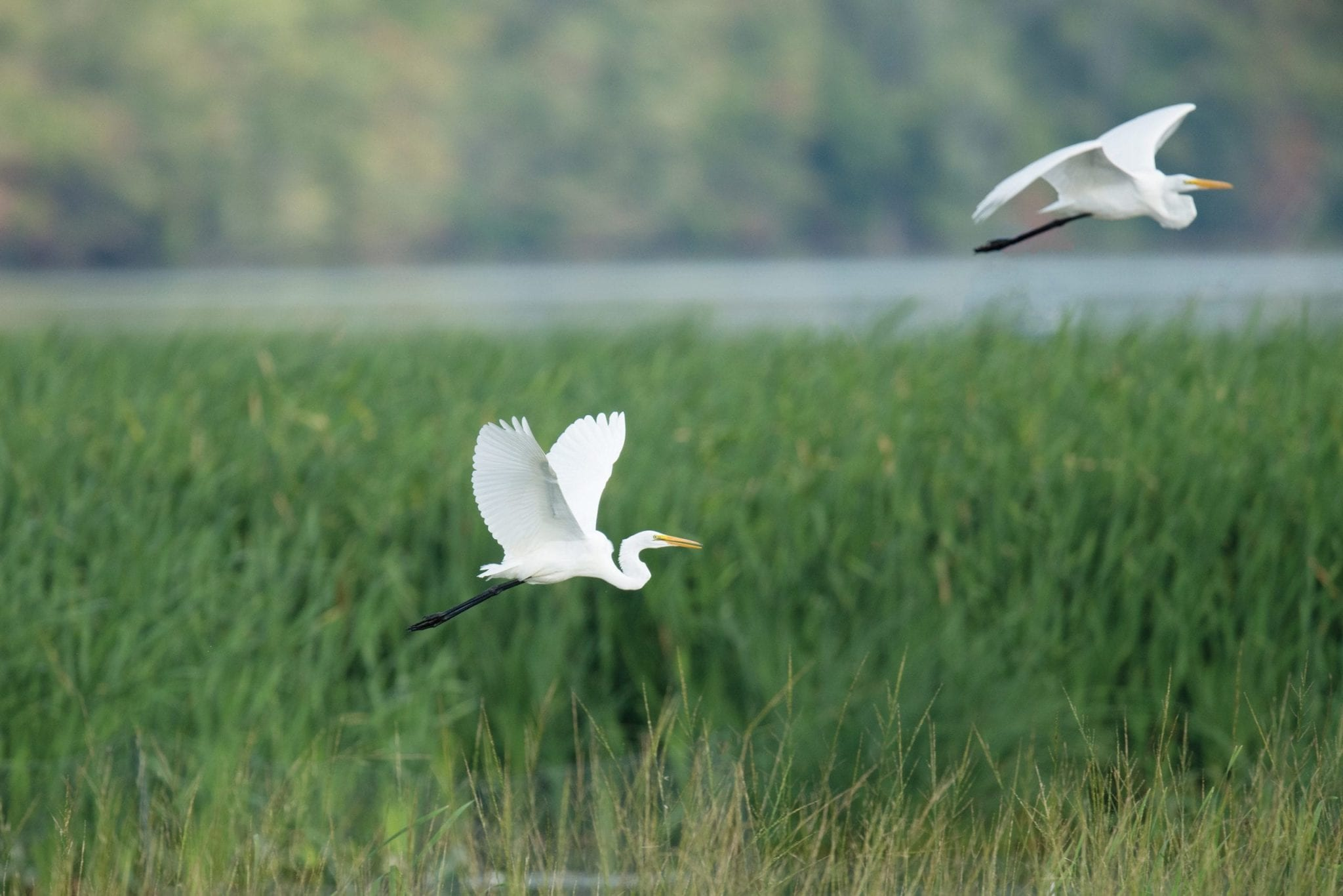 Local photographers to showcase birds returning to Onondaga Lake