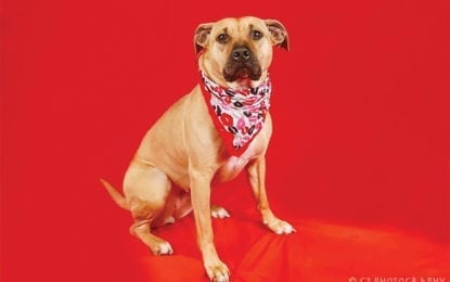 CNYSPCA presents Portraits for Pets (and people)