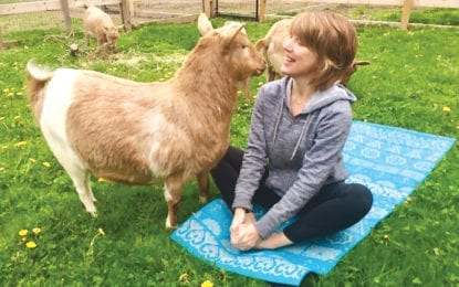 NAA-maste: Purpose Farm to offer goat yoga