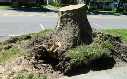Cazenovia recovering from weekend storm