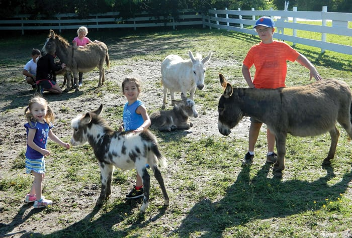 Donkey Therapy: Miniature donkey farm open one day per week to visitors