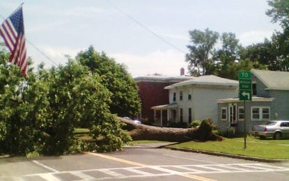 Fallen tree causes power outage in L'pool